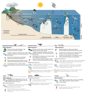 Exposure of Ecological Groups of GBR Sharks and Rays to Climate Change Factors
